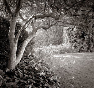 Introduction to Black and White Film Photography with Bill and Kathy Kostelec SOLD OUT