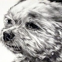 Pen and Ink Drawing - Beginning and Advanced with Jenifer LeMontagne
