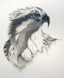 Pen and Ink Drawing-Beginning with Jenifer LeMontagne - SOLD OUT